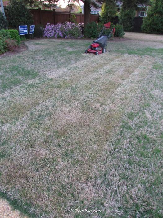 hc grass4