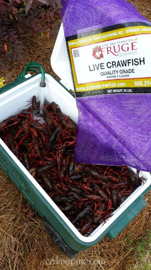 Cajun Crawfish Boil